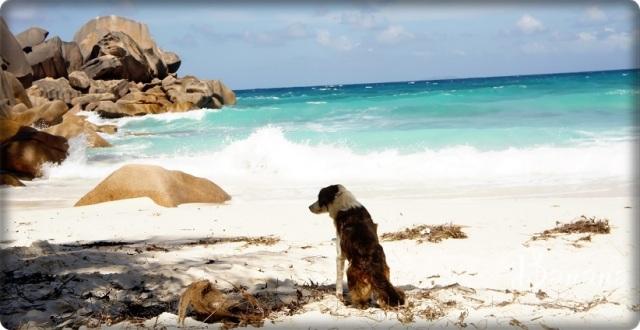 Grande Anse dog La Digue