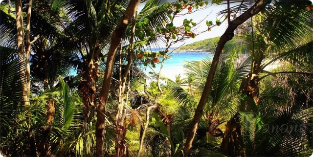 on the way to Grande Anse La Digue
