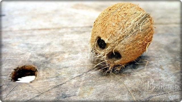 Seychelles coconut
