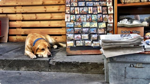 Florence dog